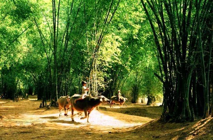 Trẻ em chăn trâu bên cây tre